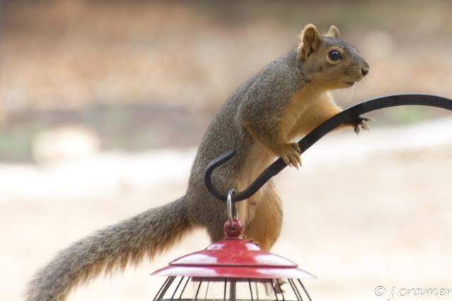 squirrel mischief.jpg